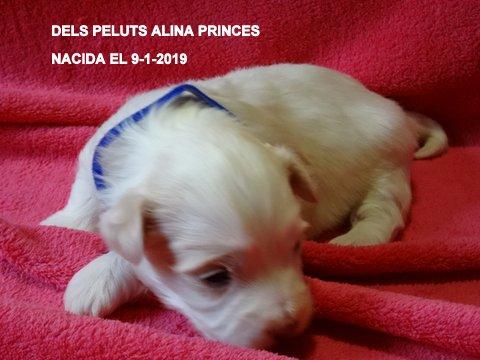 Alina Princes 2